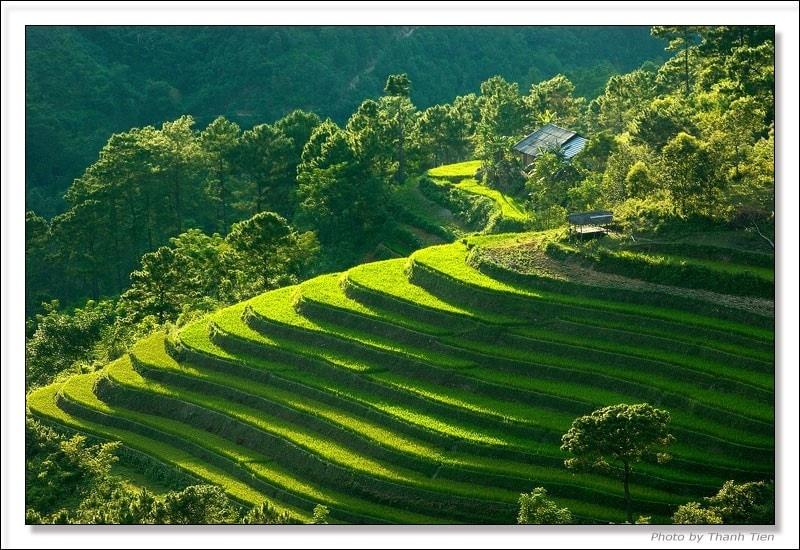 Bán nhớt Repsol chất lượng cao tại Lai Châu